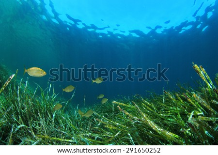 Underwater background with seaweed and fish - stock photo