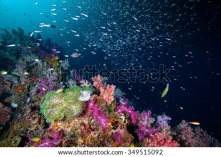 Underwater Blue Sea and soft coral on the rock  - stock photo