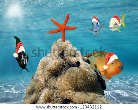 Underwater Christmas scene with funny tropical fish in red Santa Claus hat and a starfish on top of a pile of sea anemone - stock photo