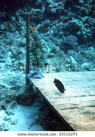 underwater christmas tree with starfish on a top and coral fish. Red sea. Egypt - stock photo