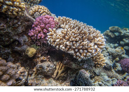 Underwater close up. Red sea coral reef - stock photo