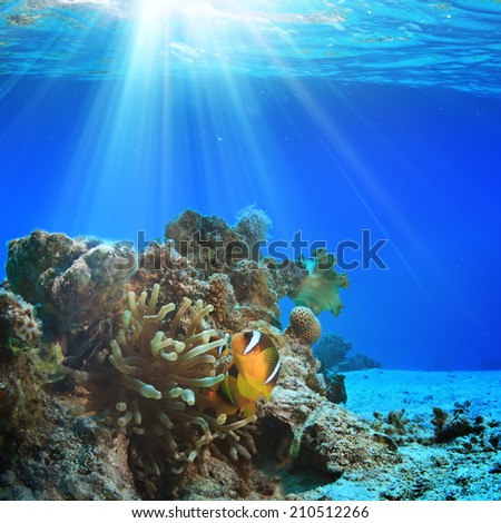 underwater coral garden with anemone and yellow clownfish below water surface - stock photo