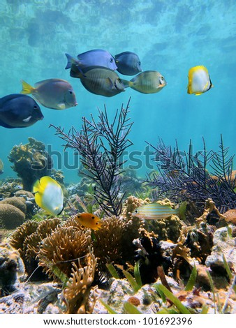 Underwater coral garden with tropical fish and water surface reflection - stock photo