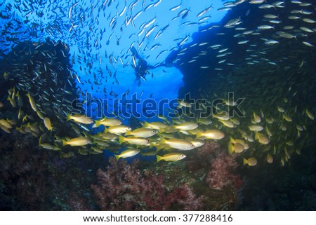 Underwater coral reef and fish and scuba divers - stock photo