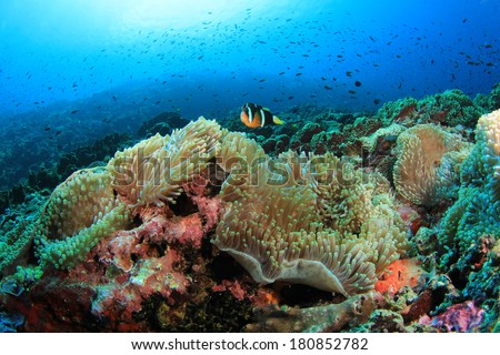 Underwater Coral Reef and Fish in Ocean - stock photo