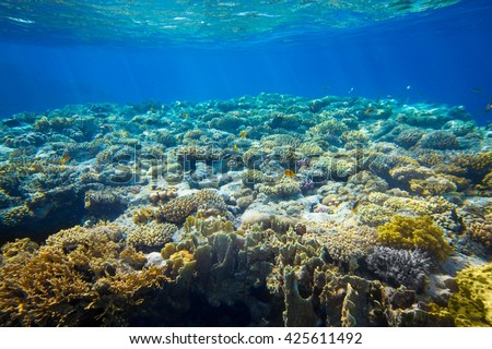 Underwater coral reef and tropical fish background - stock photo