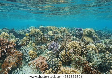 Underwater coral reef on a shallow ocean floor, lagoon of Huahine island, Pacific ocean, French Polynesia - stock photo