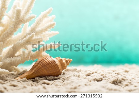 Sand Shells Stock Images RoyaltyFree Images Vectors Shutterstock