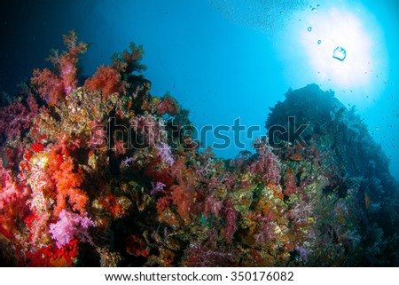 Underwater deep blue sea and soft coral against sun light  - stock photo