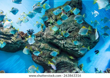 underwater image of a flock of fishes - stock photo
