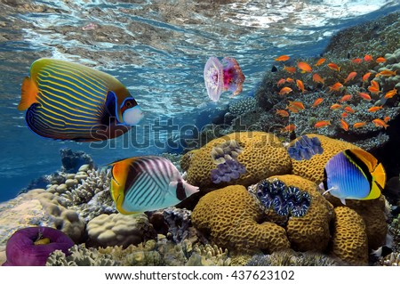 Underwater image of coral reef and tropical fishes in the Red Sea, Egypt
