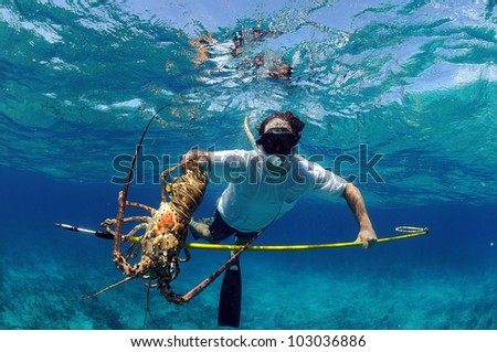 Underwater image of man catching lobster on a speargun while free diving in ocean - stock photo