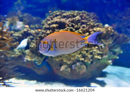 underwater image of reef and a tropical fish