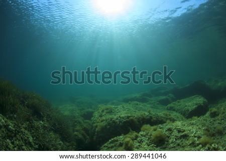 Underwater landscape background - stock photo