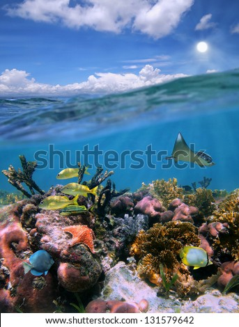 Underwater landscape in a colorful coral reef with fish and split by waterline, cloudy blue sky with the sun - stock photo