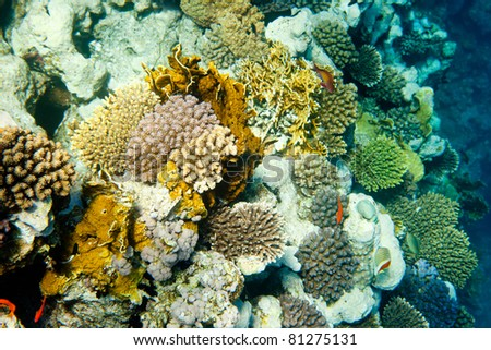 Underwater landscape of Red Sea