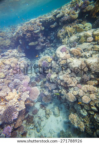 Underwater landscape. Red sea coral reef. Many little fishes. - stock photo