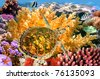 Underwater landscape with couple of Butterfly fishes and turtle - stock photo