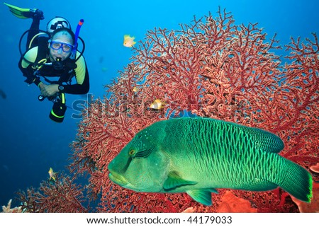 Underwater landscape with scuba diver, gorgonian coral and napoleon - stock photo