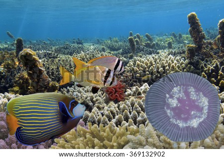 Underwater life, close up image of branching fire coral. - stock photo