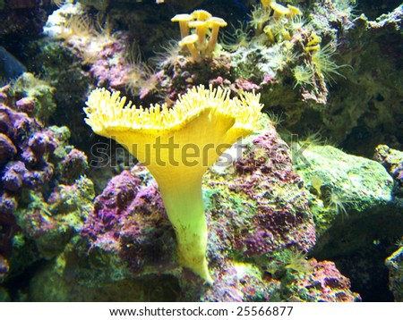 Underwater life of anemones. Close up. Background. - stock photo