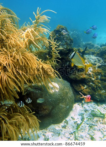 Underwater marine life with sea plume gorgonian, stony corals and tropical fish, Caribbean sea, Mayan Riviera, Mexico - stock photo