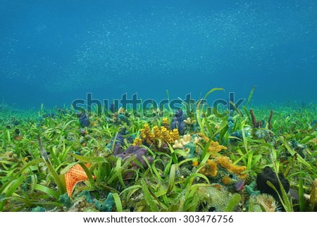Underwater on the ocean floor with seagrass and colorful sponges in the Caribbean sea - stock photo
