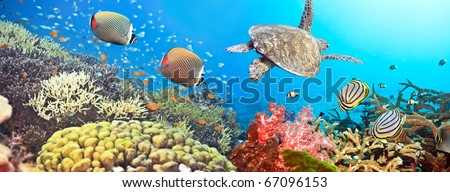 Underwater panorama with turtle, coral reef and fishes - stock photo