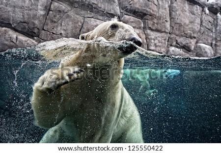 Underwater photo of a Polar Bear - stock photo