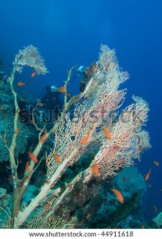 Underwater photographer and corals - stock photo