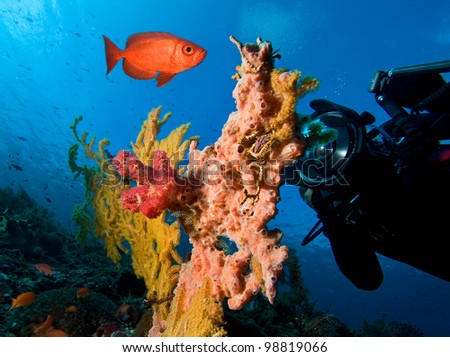 Underwater photographer by coral reef - stock photo