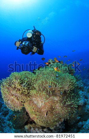 Underwater Photographer scuba dives at Anemone City, Red Sea