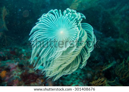 Underwater photography of a spirograph - stock photo