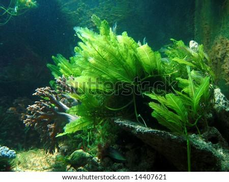 Underwater plant - stock photo
