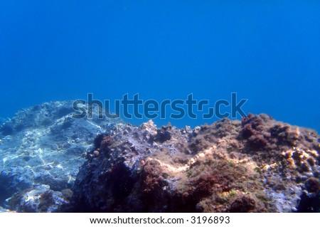 Underwater reef - stock photo