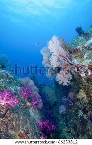 Underwater Reef Canyon in the Andaman Sea, Thailand, Koh Tachai with colorful soft, hard corals and Sea fans! - stock photo