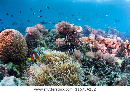 underwater reef scape - stock photo