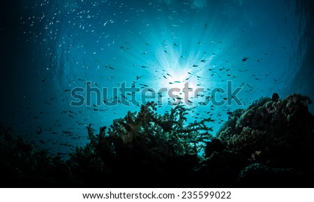 underwater reef scapes with divers and marin elife - stock photo