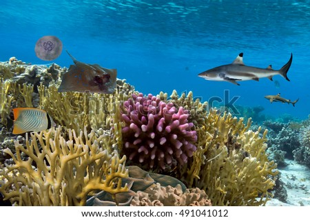 Underwater scene. Coral reef, colorful fish groups, sharks and sunny sky shining through clean ocean water