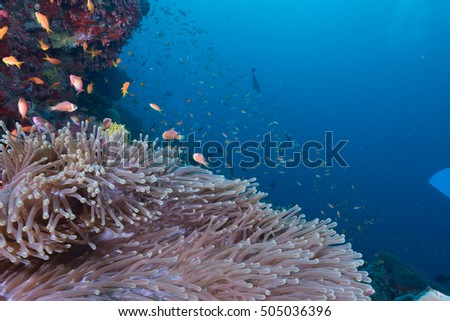 Underwater scene in Maldivian sea