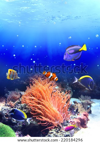 Underwater scene with anemone and tropical fish - stock photo
