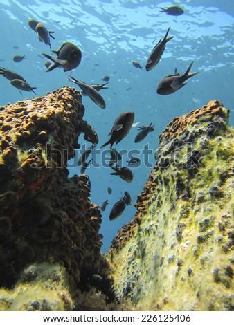 underwater scenery at Aegean sea - stock photo