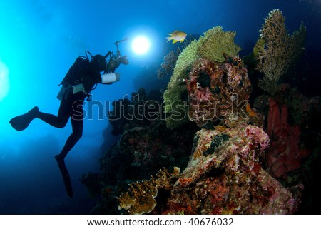 underwater scenery at Menjangan island, Bali - stock photo