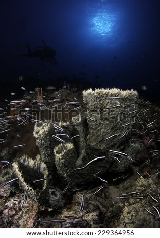 Underwater Scenery during Golden Hour - stock photo