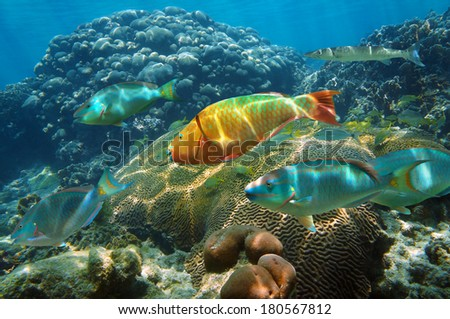 Underwater scenery in the Caribbean sea with colorful shoal of fish in a healthy coral reef, Mayan Riviera, Mexico - stock photo