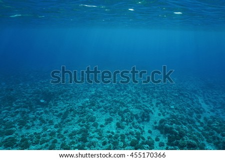 Underwater Scenery, Ocean Floor On The Outer Reef Slope, Pacific Ocean,  French Polynesia