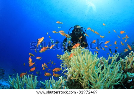 Underwater Scuba Diver and Coral Reef with Tropical Fish in the Red Sea - stock photo
