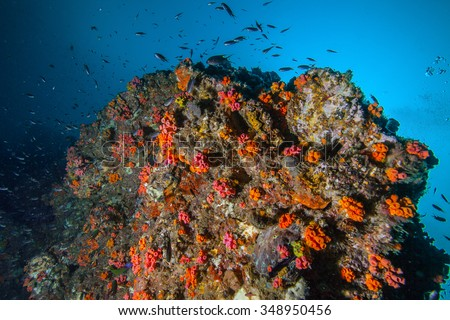 Underwater sea and soft coral