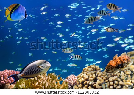 Underwater shoot of vivid coral reef with a fishes, Red Sea, Egypt - stock photo