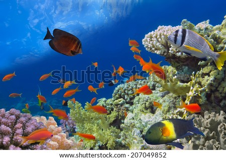 Underwater shoot of vivid coral reef with a fishes, Red Sea, Egypt. - stock photo